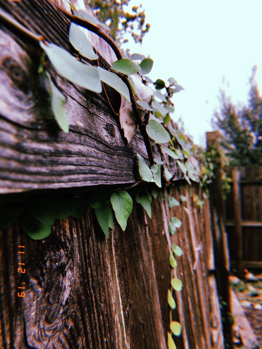 I never post pics I take... SO have these I took today of vines on my backyard fence🌿