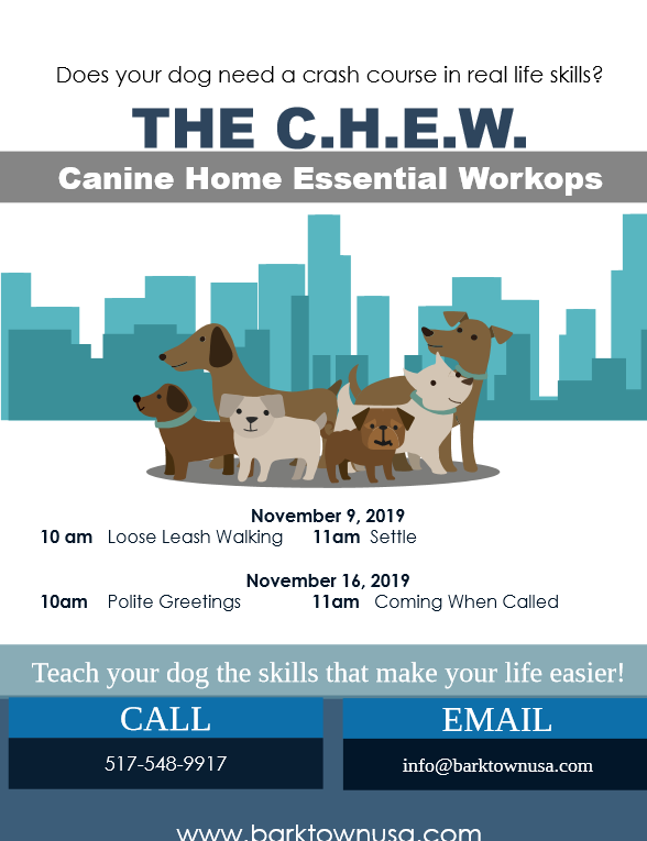 Join us in our November workshop session, covering a wide array of fun & functional topics for dog owners! In our 1 hour session, you will get hands on instruction from our professional trainers. No long term commitment required. Contact us today!