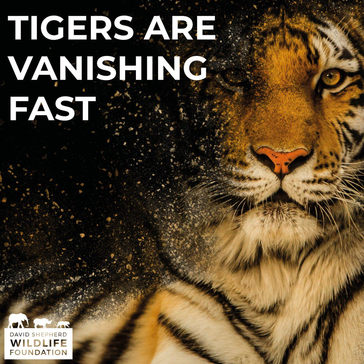 RT @Ethical_Ins: At @Ethical_Ins , we want to help make change! We want people to take out their #insurance through us so we can help charities like @DSWFWildlife with #tigerappeal  We will give up to 25% of our commission back to #charity Request a quot… <br>http://pic.twitter.com/VlK5sxLsBI