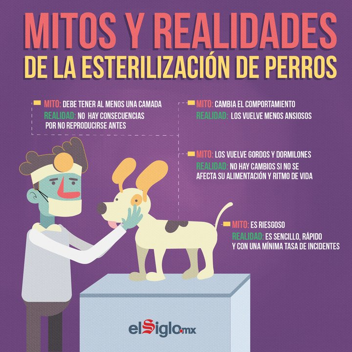 Mitos y realidades de la esterilización de mascotas. 🐶 #AmorAnimal https://t.co/k7TIzQv03N