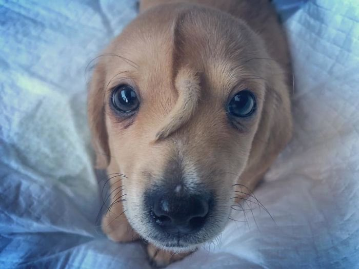 This rescue puppy has a tail growing out of his forehead and its the cutest thing in the world.
