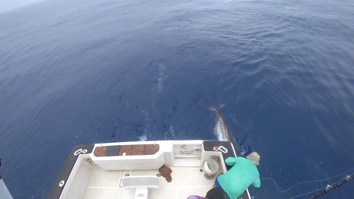 Tonga - Blue Marlin Magic released a Blue Marlin.