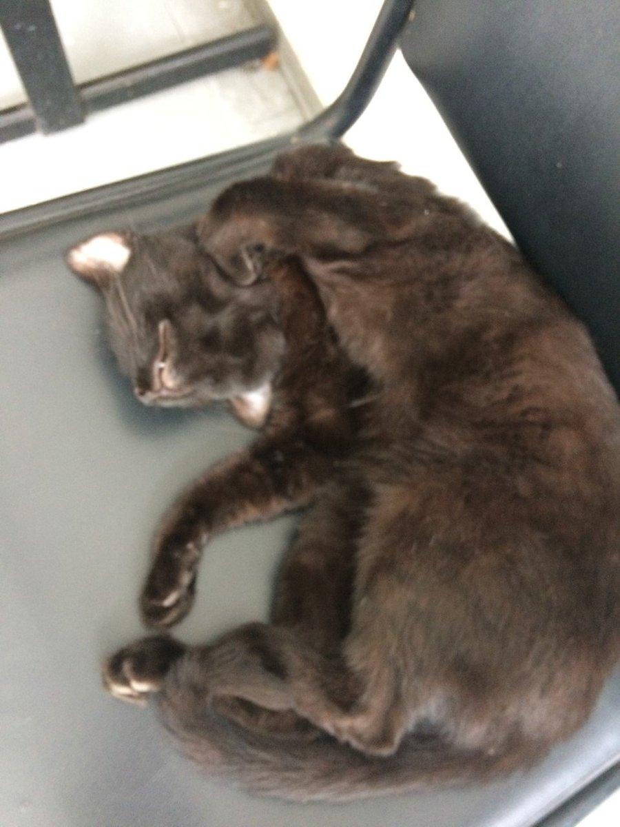 Como eu queria estar agora! #Inveja #gatos #dorminhoco