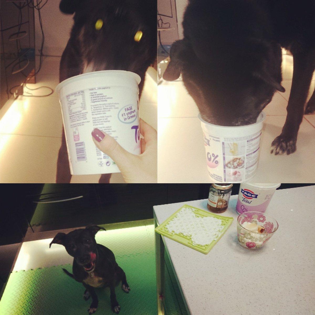 16.05.2017 & 13.11.2019 💕🌟 Memories old and memories new 🌟 💕 #becausemilly #girlsnightsin #yogurtyummies #lovemygirls #Milly💖&Clover🍀 #spoilt #specialtreats #alwaysremember #alwaysloved #neverforgotten #dogsoftwitter  🐾