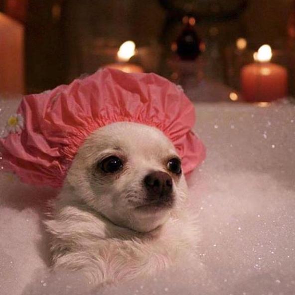 *gets in 🛀 & realizes she forgot to grab a towel*#repost from @byrdiebeauty beauty ✨#bottledbeautysleep #awakebeauty