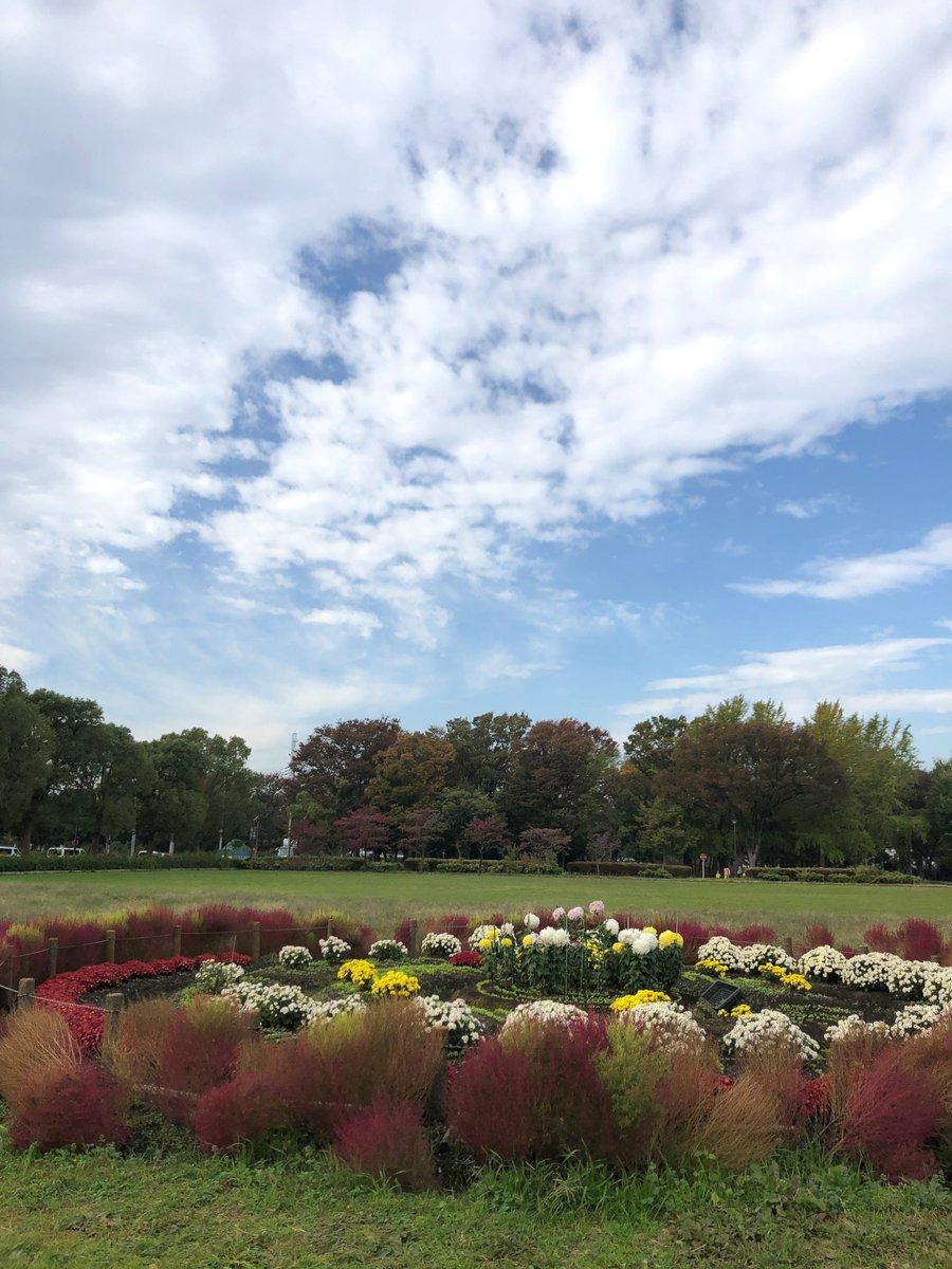 朝方の雨模様から一転して、清々しい青空が広がっています。コキアが緑から赤色に色づきはじめ、秋の深まりを伝えてくれます。今日は、気温も20度を超えるようです。駅近くの花壇まで足をのばしてみてください!#コキア