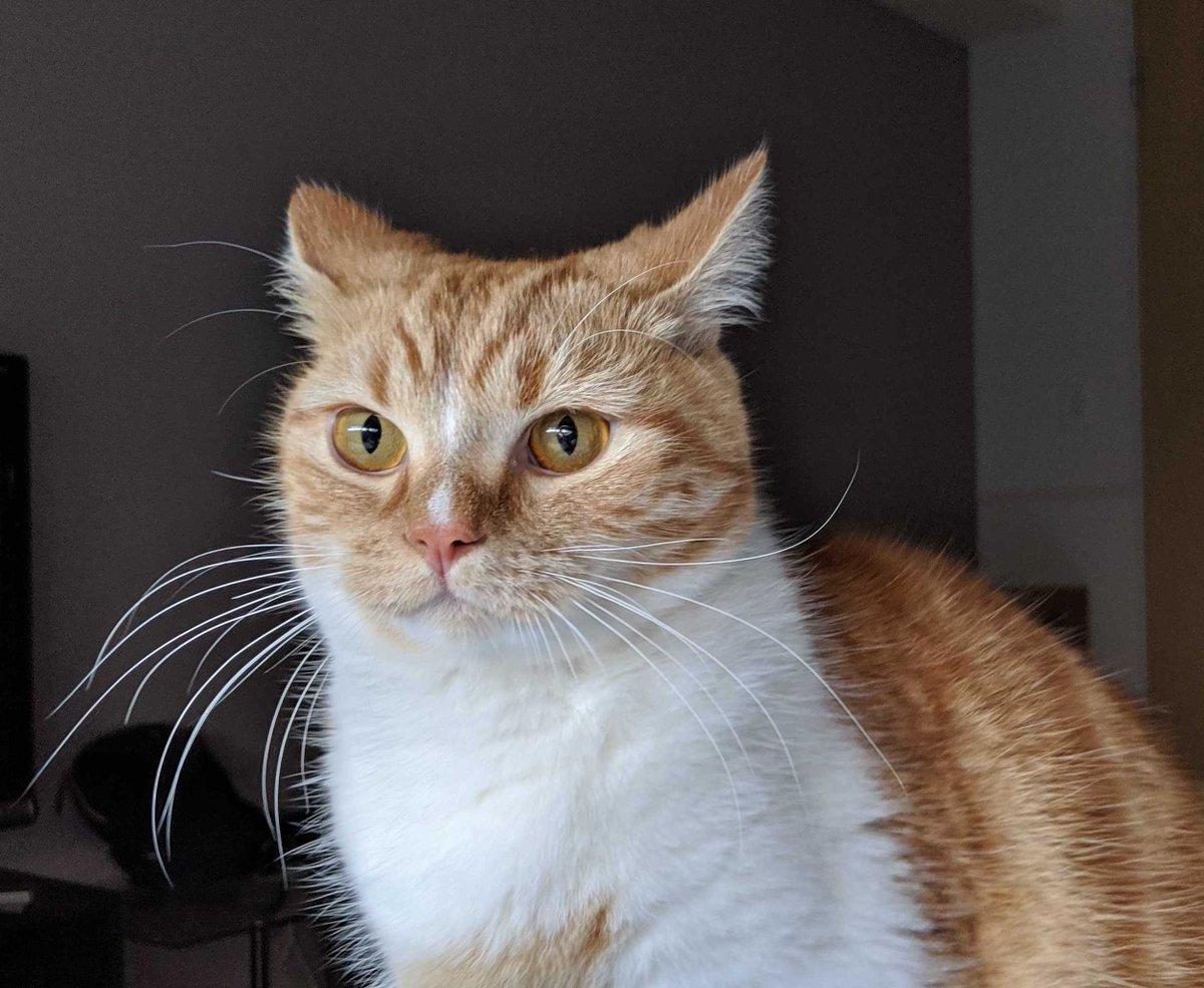 今日の担当のめろたんです!!こっちは起きたときに目の前で虚空を見つめていた猫のはるさめ!よろしくね😆(めろたん)