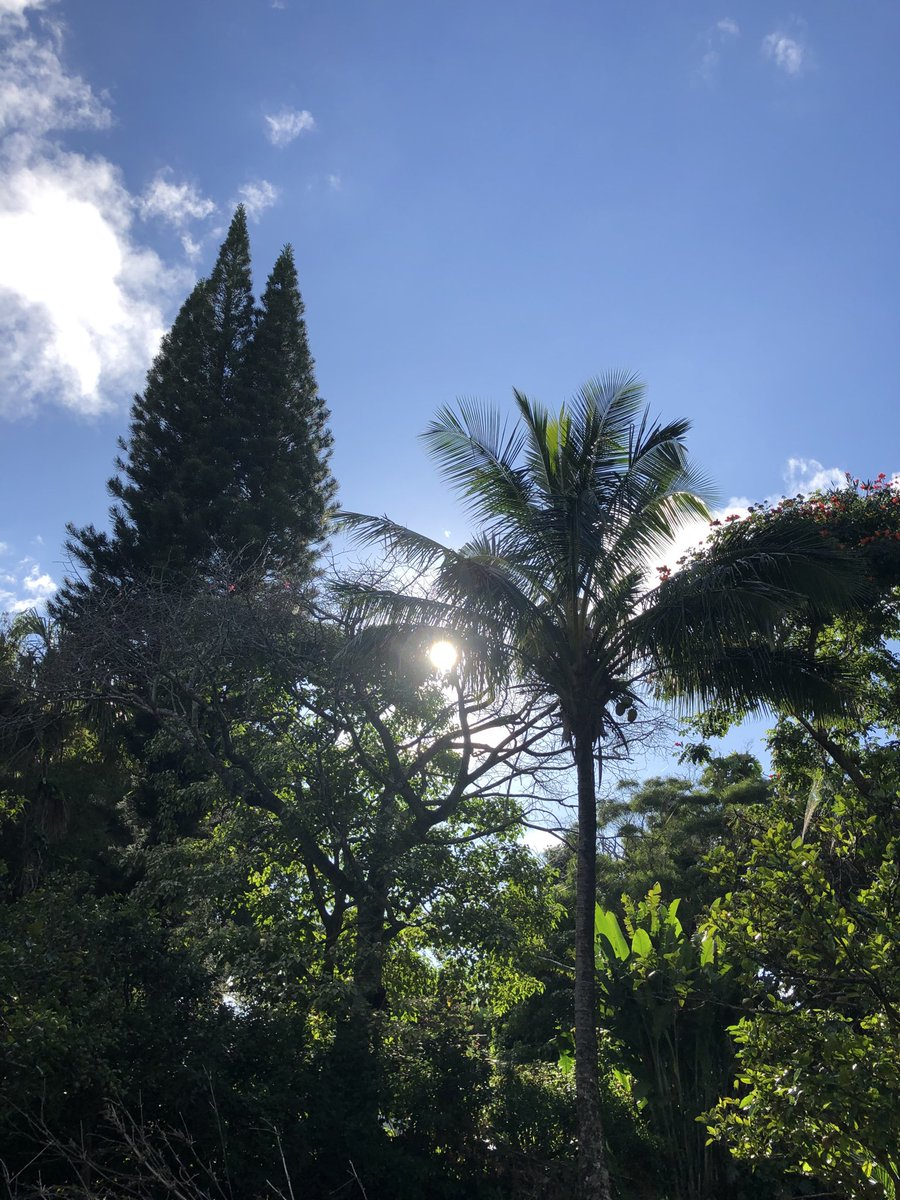 test Twitter Media - Hot in Haiku. #cmweather #Maui https://t.co/A1IXWdXReV