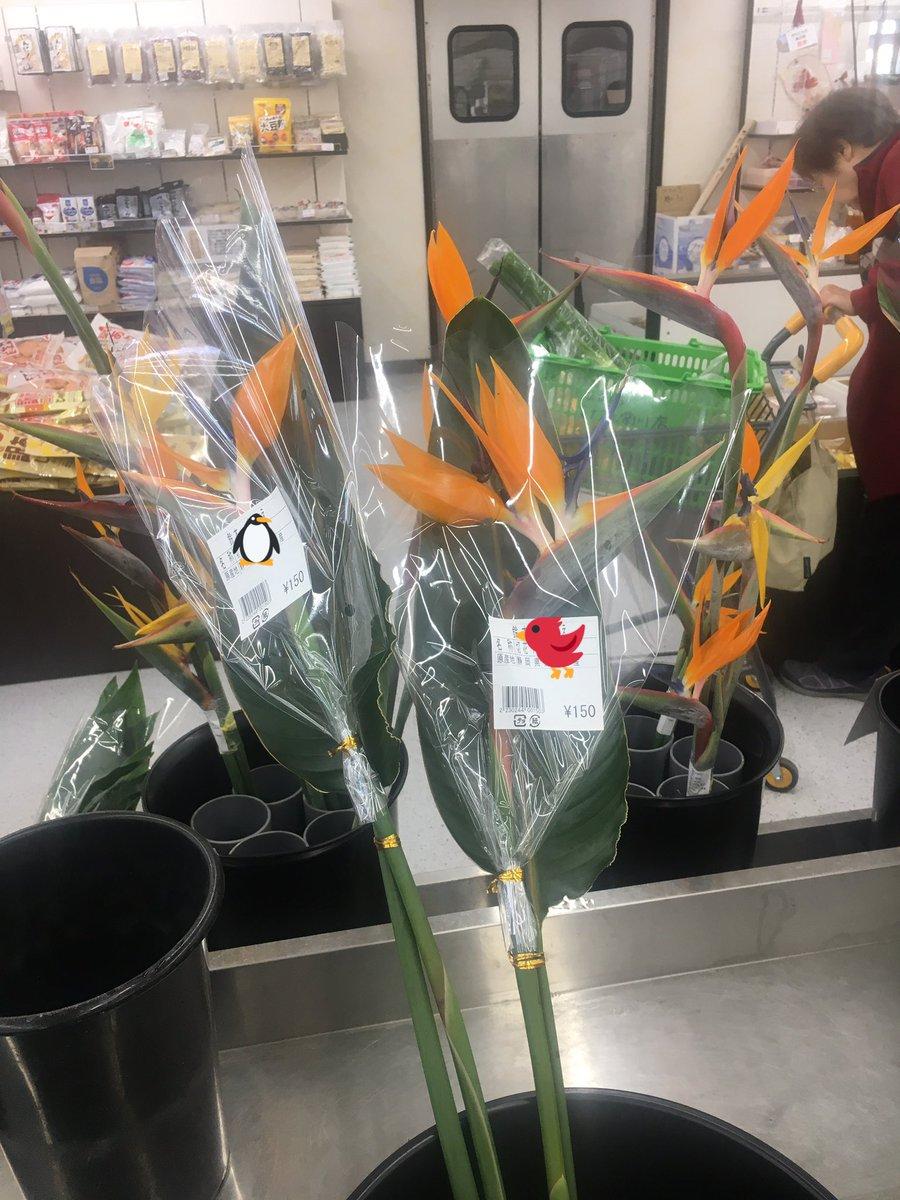 花はどれも好きだけど特別に好きな花のひとつが…!立派だなあ……っ!! 花瓶あればなあ(´-ω-`)  #極楽鳥花 #ストレリチア