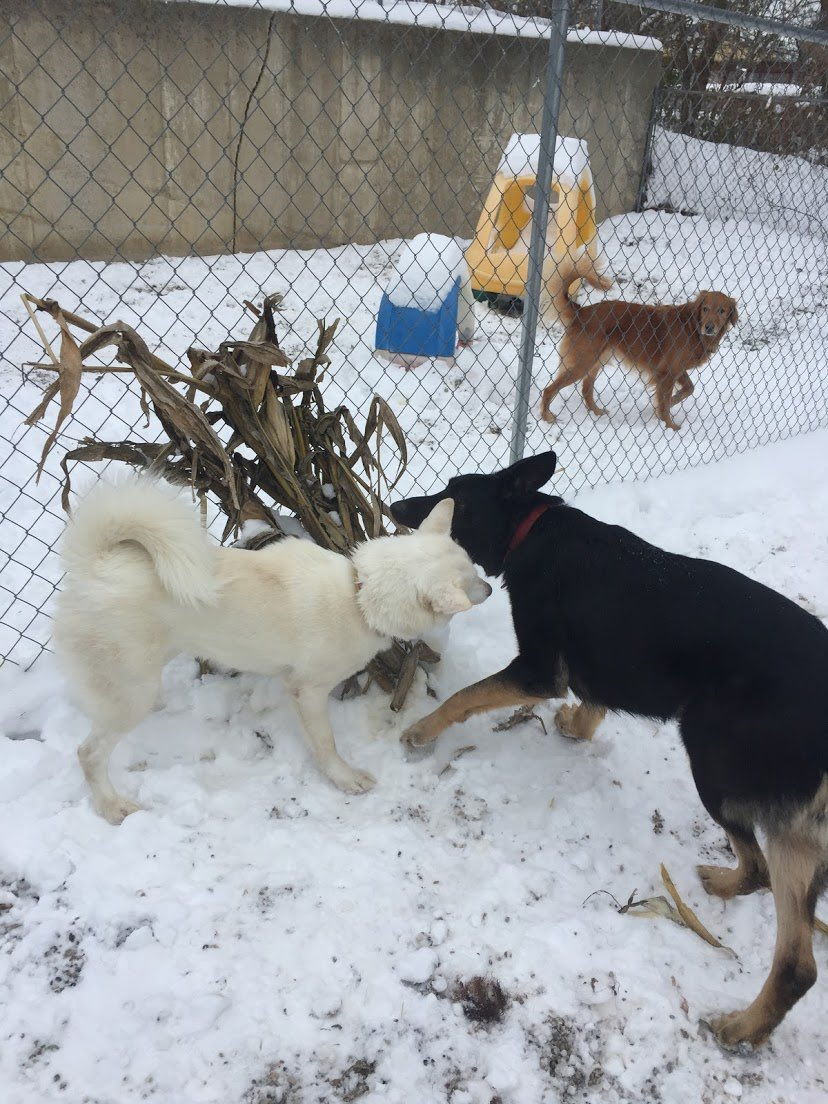 Felix and Sesi love running around in the snow together!