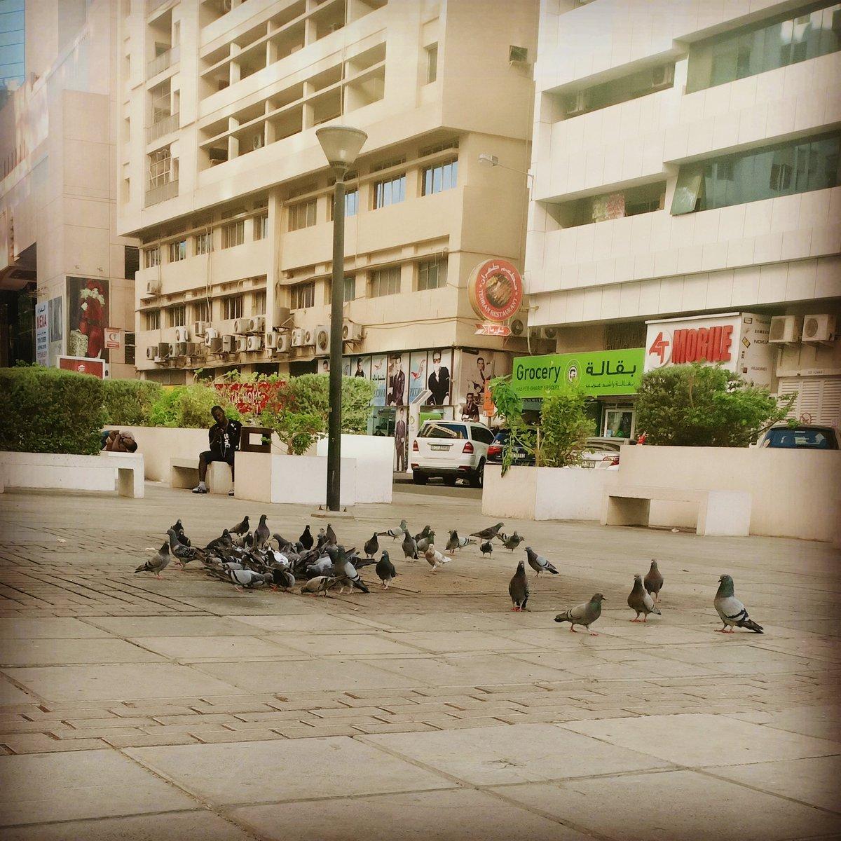 #shooting #tvc #media #Production #Dubai #travelphotography #workout #work #birds