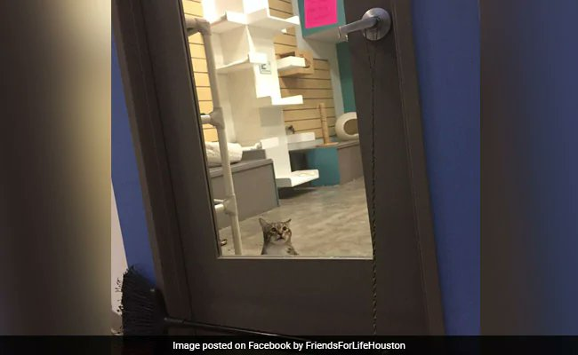 """Rogue shelter cat is viral for """"repeatedly"""" letting other cats out.https://www.ndtv.com/offbeat/quilty-the-cat-is-viral-for-repeatedly-letting-other-cats-out-2132243…"""