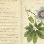 Image for the Tweet beginning: Anne Kingsbury Wollstonecraft, sister-in-law of