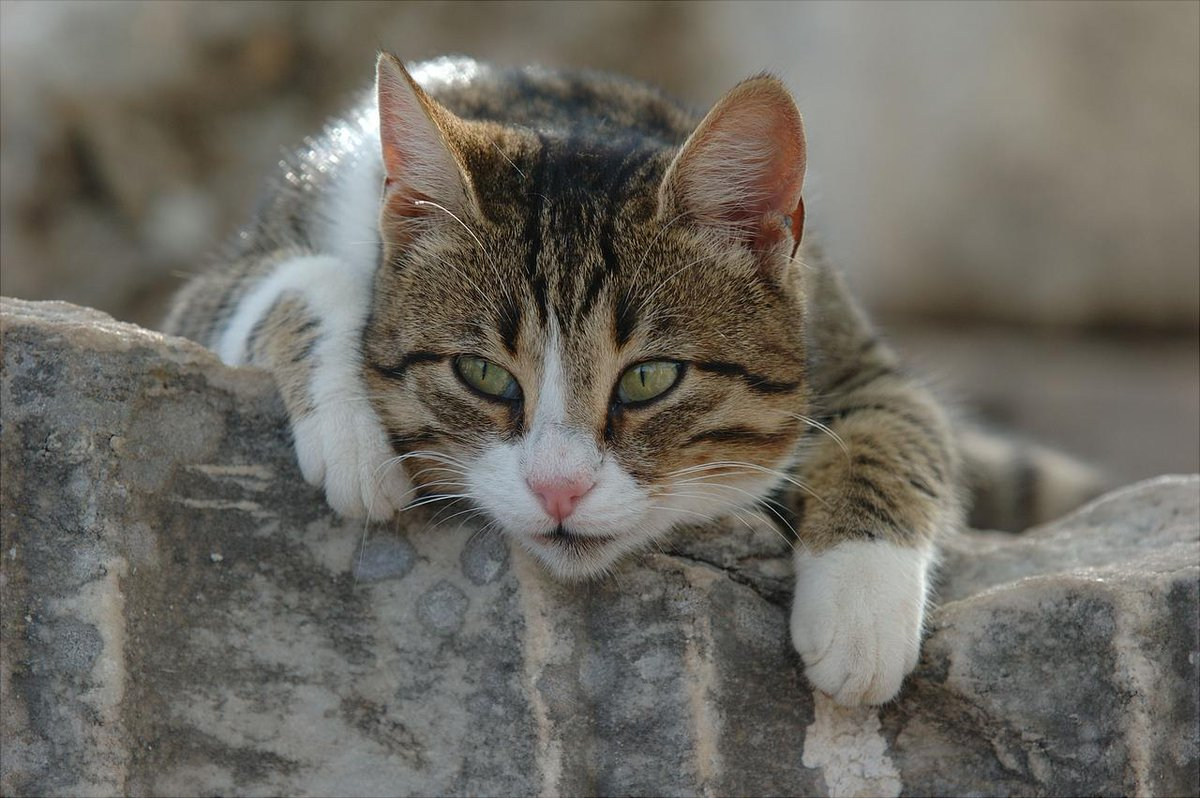 уаз фото кота федота такое фототип