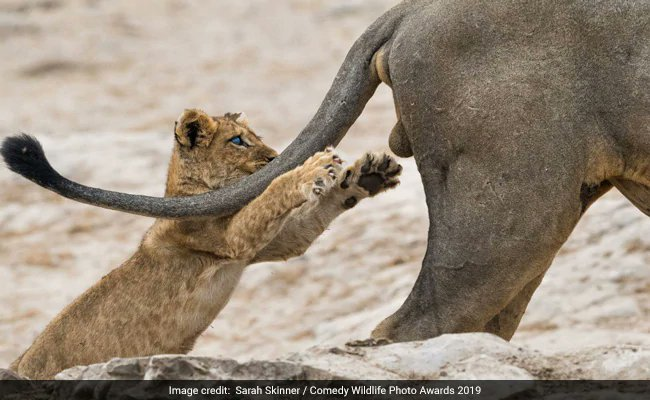 And the winners of Comedy Wildlife Awards 2019 are...https://www.ndtv.com/offbeat/and-the-winners-of-comedy-wildlife-awards-2019-are-2132367…