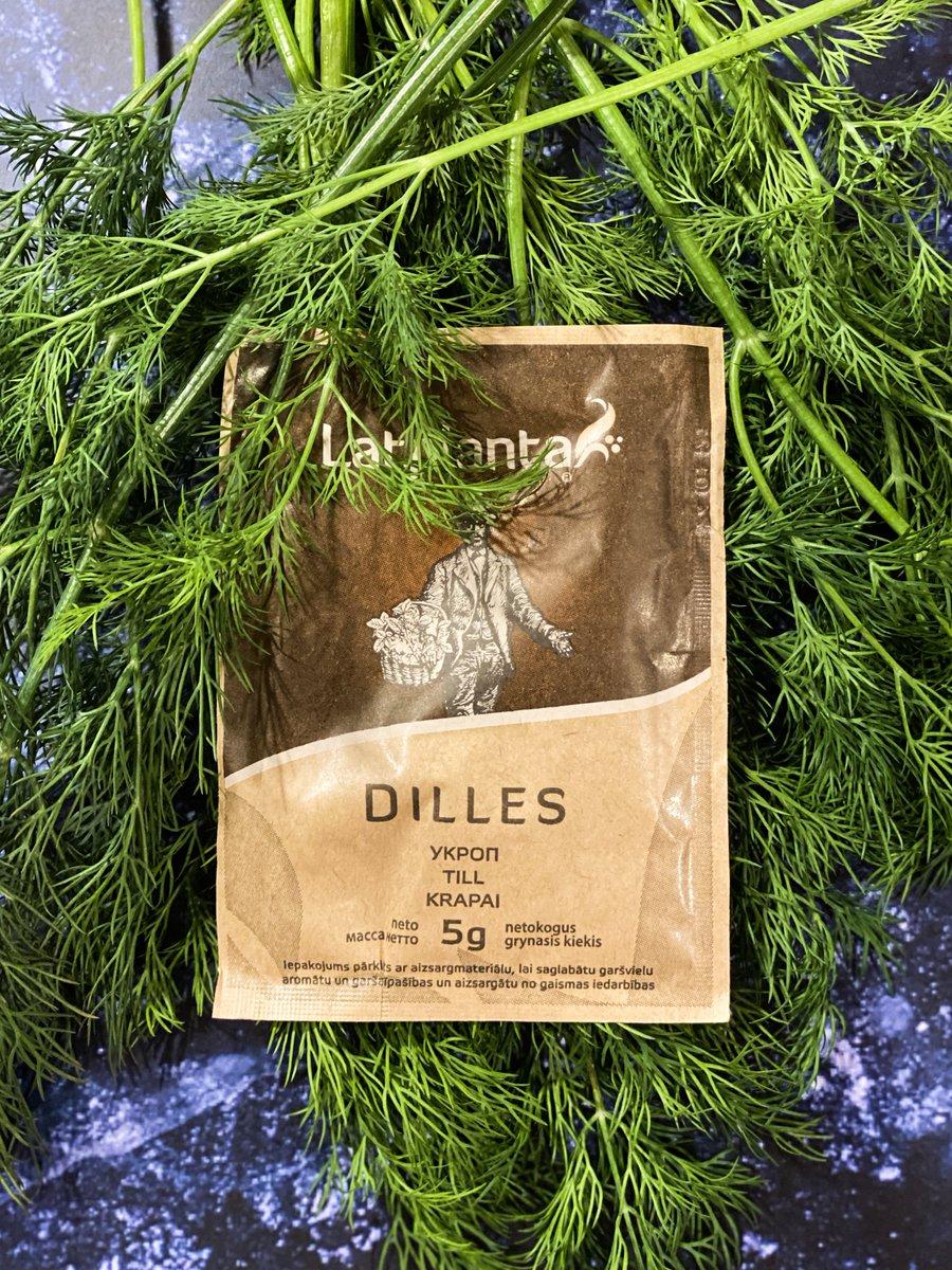 Īsceļš Tavā virtuvē!  Diļļu garša un smarža arī ziemā - LATPLANTA  -Sarunas vērta garša- https://t.co/t7VplqCbnk