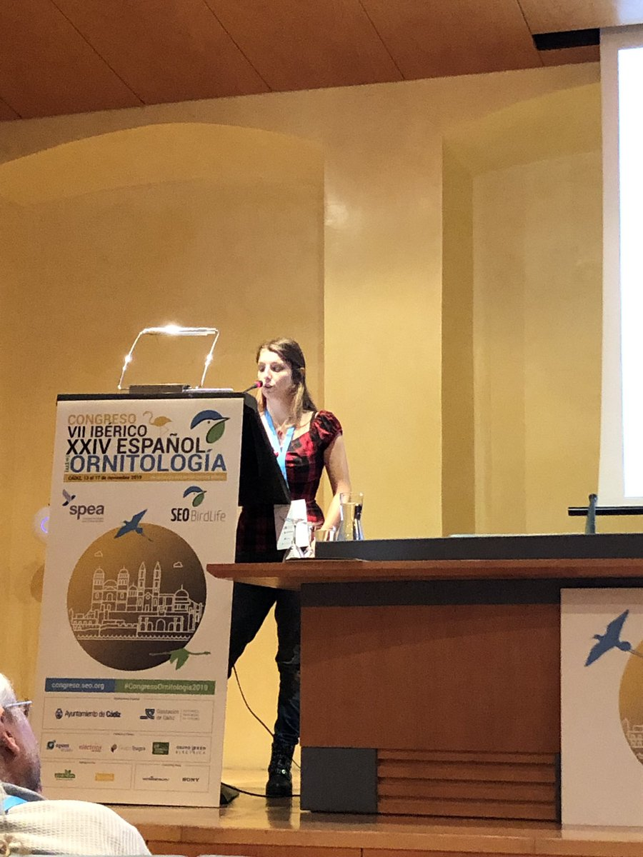 The @PhD_EBD Justine Le Vaillant from @ebdonana is giving an oral talk about the #evolvability of phenotypic plasticity of pied #flycatchers under environmental variation at the #CongresoOrnitologia2019 Nice talk!!! @SEO_BirdLife @spea_birdlife @inbetweenering