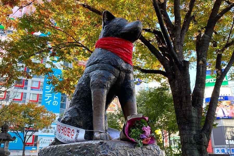 La estatua de Hachiko en Japón fue decorada con un pañuelo rojo en homenaje al Negro Matapacos