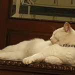 Image for the Tweet beginning: Much loved and missed #WhiteCat