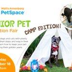 Image for the Tweet beginning: Celebrate Adopt a Senior Pet