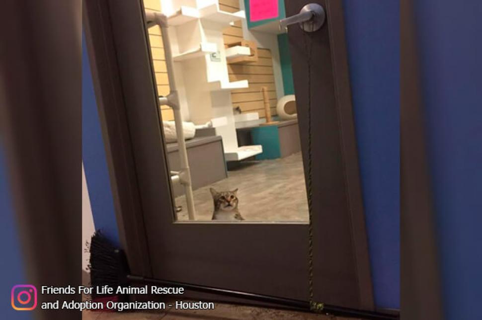 Conozca a Quilty, el 'gato fugitivo' que lucha contra las puertas cerradashttp://bit.ly/353qw1w