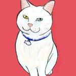 Image for the Tweet beginning: うちの白猫オッドアイ #猫イラスト  #しろねこ #whitecat