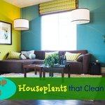 Image for the Tweet beginning: Top 10 Houseplants that Clean