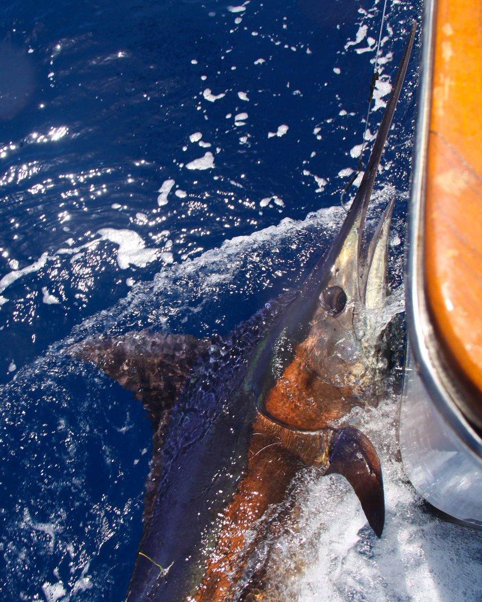 Exmouth, Aus - InnKeeper went 1-2 on Blue Marlin.