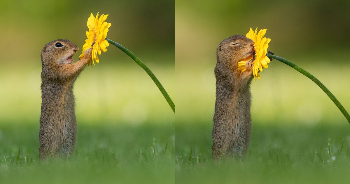 A Dutch photographer caught a squirrel stopping to smell a flower, so cute ☺️