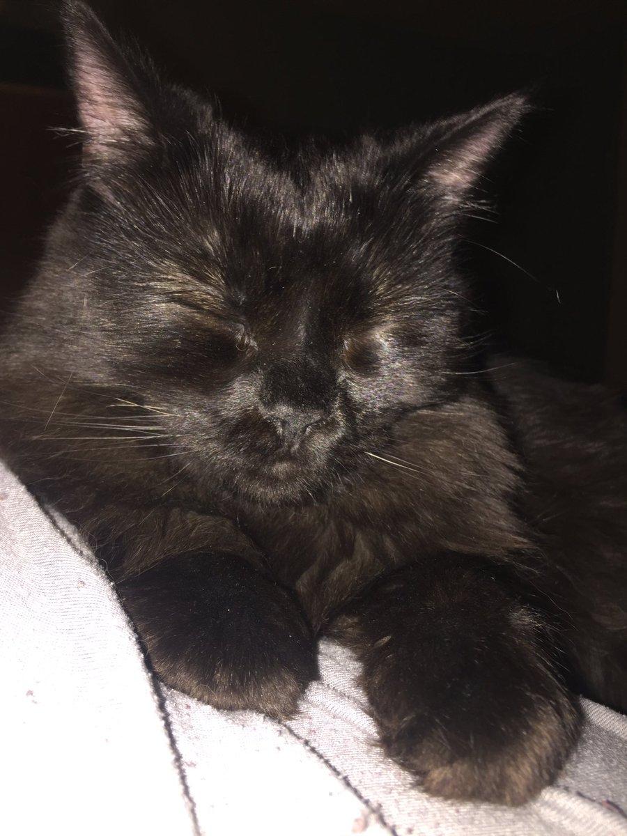 Black kitten sleeping.