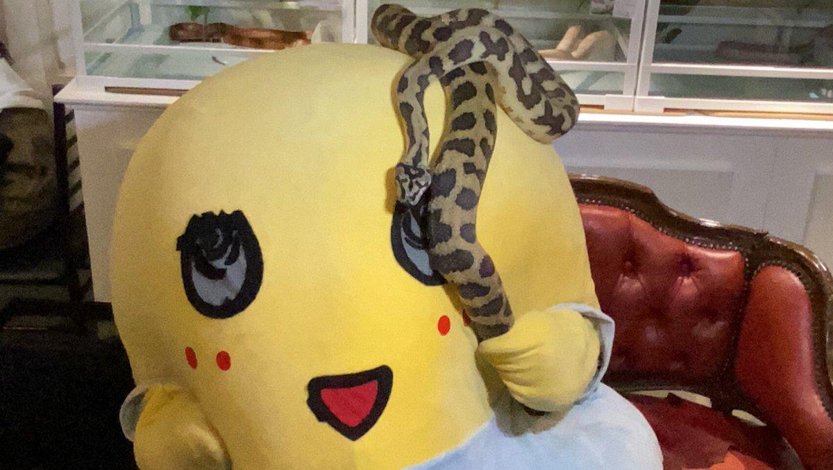 めっちゃ懐かれてるなっしー♪ヾ(。゜▽゜)ノ今日も一日お疲れ様なっしー♪スネークカフェってとこに行ってきたなっしー♪蛇も慣れるとかわゆすなっしなー♪ズッシリとヘビーな奴なっしー♪明日もみんな笑顔で過ごせます様に梨汁ブシャー:*もやすねーく