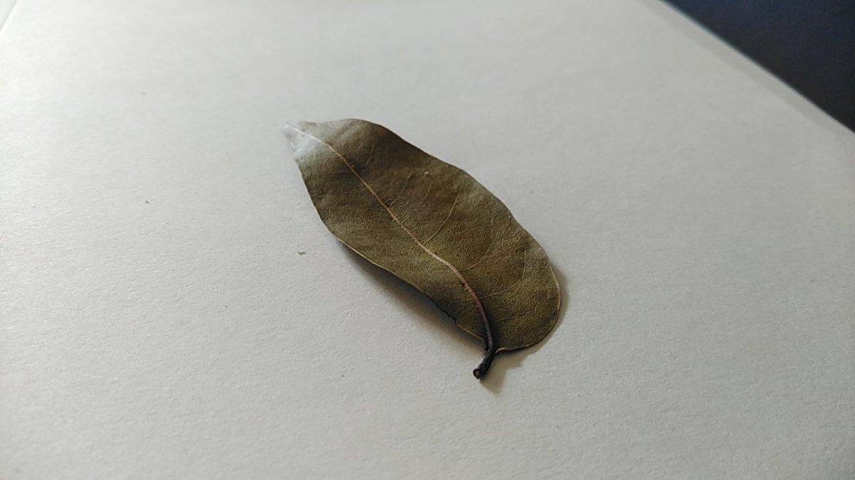 Cuando ves las hojas de la caoba centenaria caer y flotar es porque el otoño ya está dando paso al invierno en el Caribe.  #ArribaMiQuisqueya #LoveTheNature 😁✌🏾🍂🇩🇴