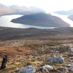 Image for the Tweet beginning: #collies gathering in Harris. I