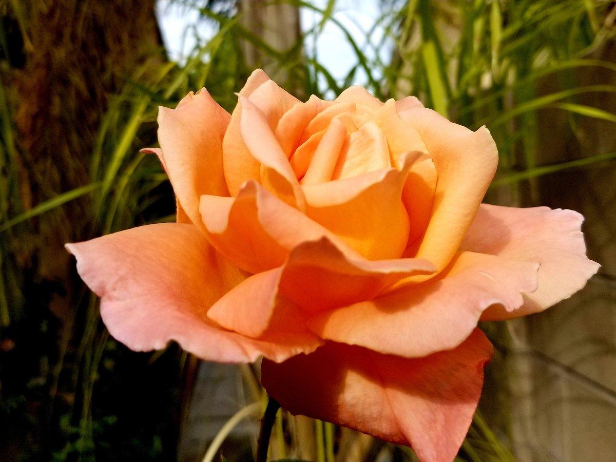 #FridayFeeling Fall Flower <br>http://pic.twitter.com/wpeCX9XRR0
