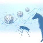Image for the Tweet beginning: Experteninterview zur Ausbreitung des #WestNilVirus