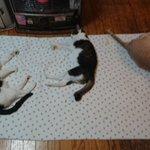 ストーブを出したら、早速猫ちゃん達が寄ってきた!しかも、知らないノラも・・・!