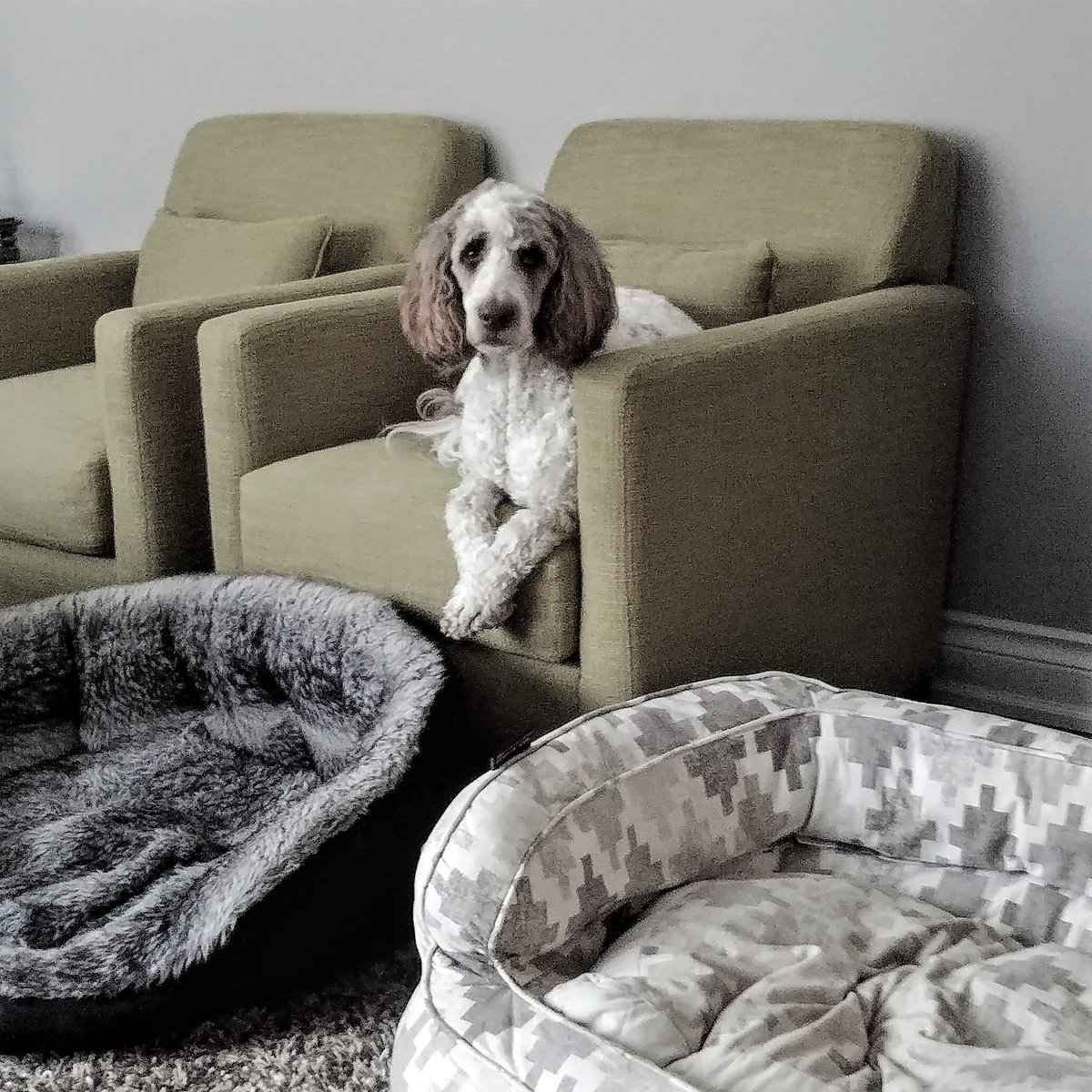 """What?????? """"Your choice of dog bed is neither firm nor my colour."""" #FridayFeeling <br>http://pic.twitter.com/plXVuiMYzT"""