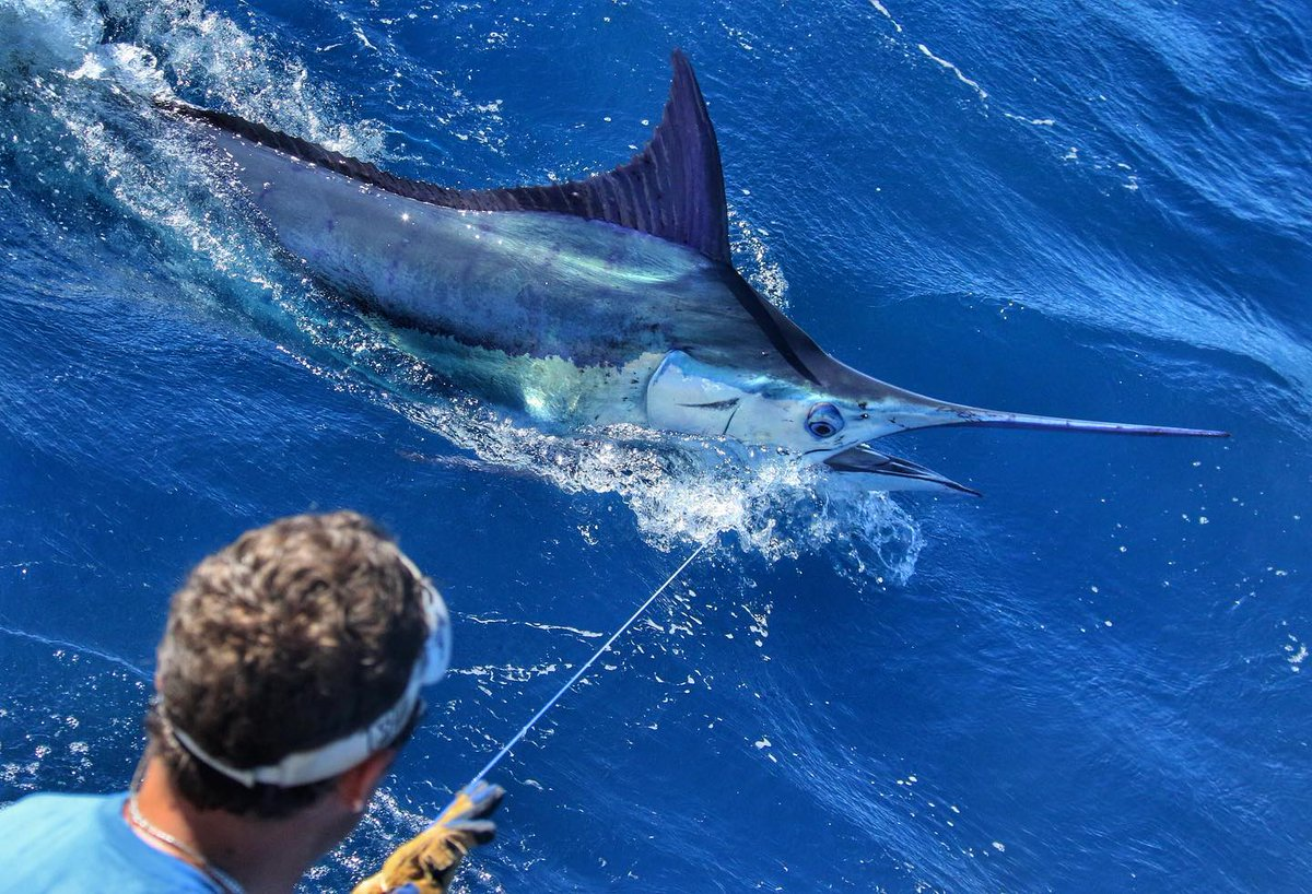 Exmouth, Aus - Peak Sportfishing went 2-2 on Blue Marlin.