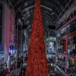 Image for the Tweet beginning: Canada's tallest Christmas tree was
