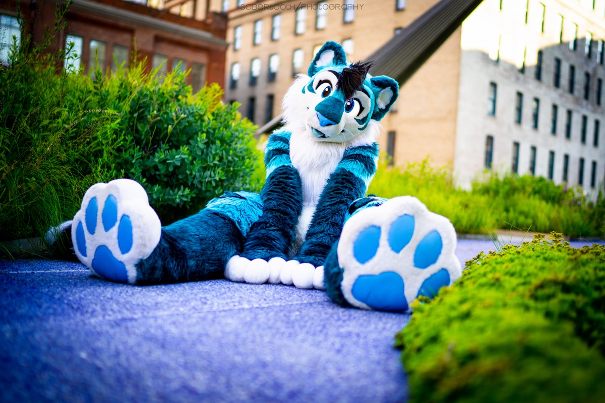 Who wants to come cuddle this kitty?  Come stay warm with some good snugs!  Let me know  (#FursuitFriday)  : @vsabertoothv<br>http://pic.twitter.com/XIRFZ6JSIr