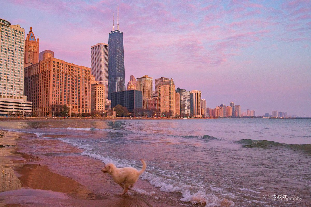 When one of my dogs decides he wants to do a cameo in one of my shots.  Tuskar photobombing on Saturday morning in Chicago.  #weather #news #ilwx #chicago