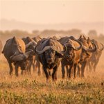 Image for the Tweet beginning: South African safaris for first-timers: