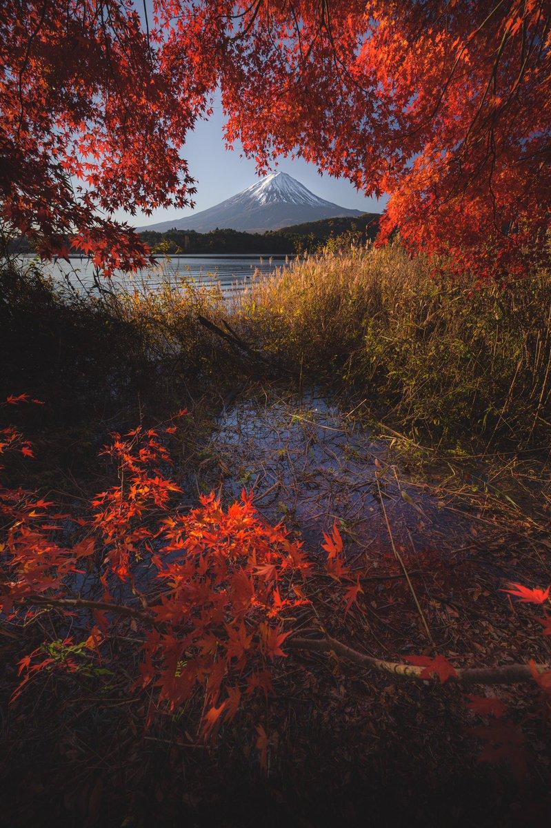 今朝富士です。河口湖の紅葉綺麗に色付いてました。