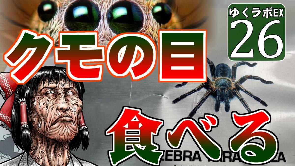 目 の マイクラ クモ