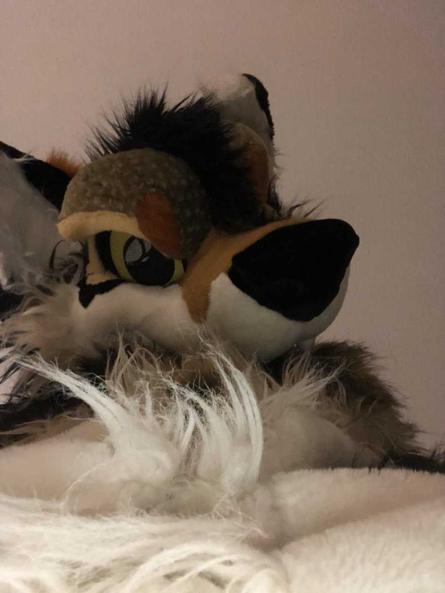 I require brushing #FursuitFriday