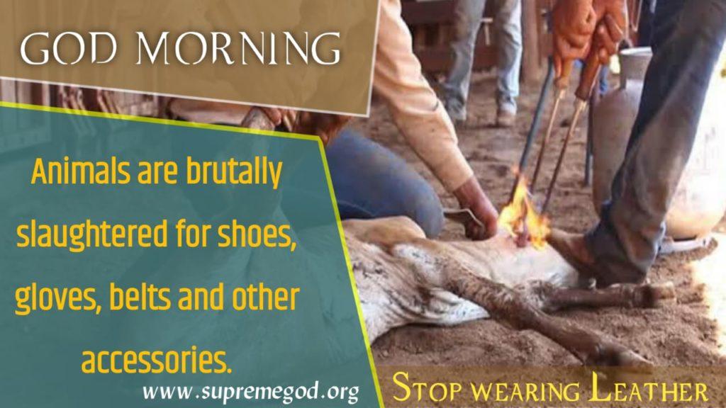 #SaturdayMotivation God morning Jeev hatya mahapap hai. @SatlokChannel