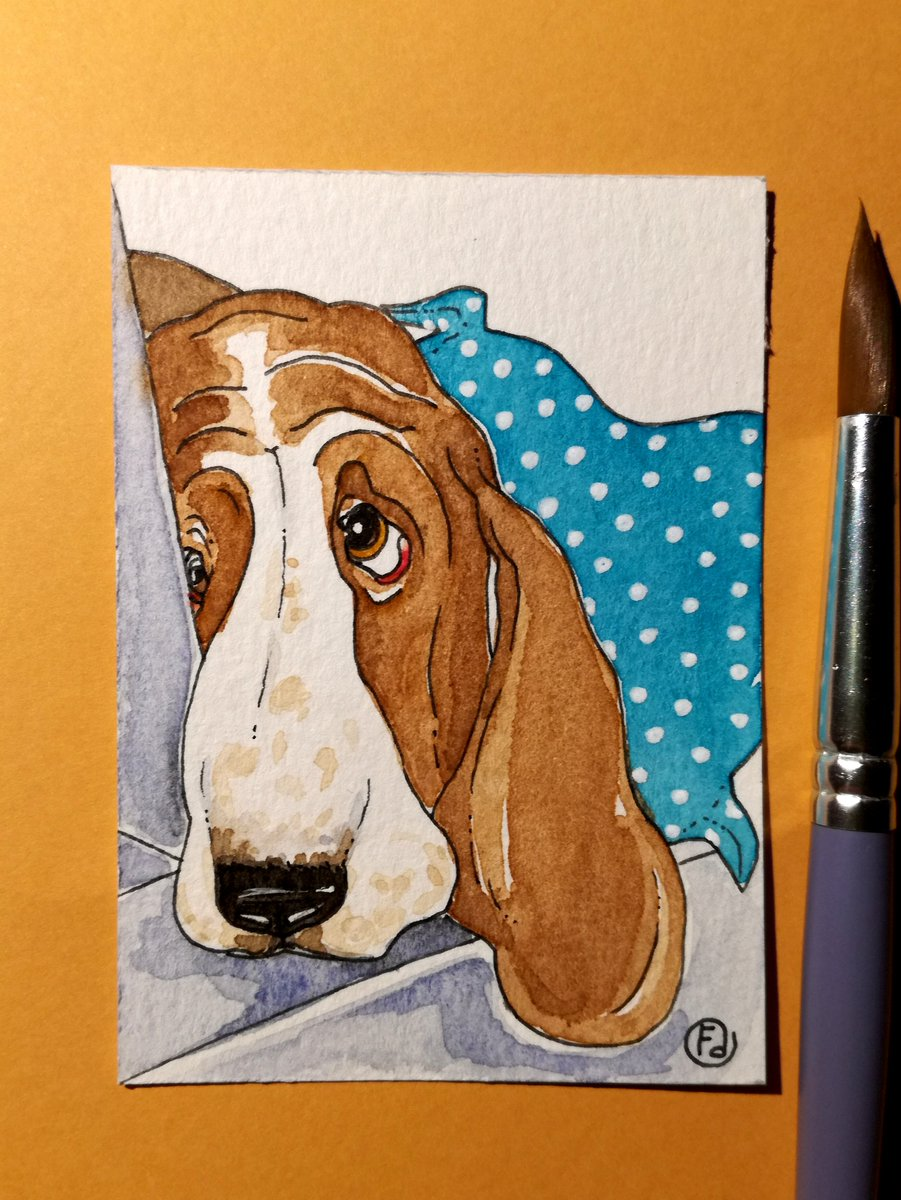 Basset Hound. ACEO/ATC  brown-white, watercolor painting  #bassethound #doglovers #Original