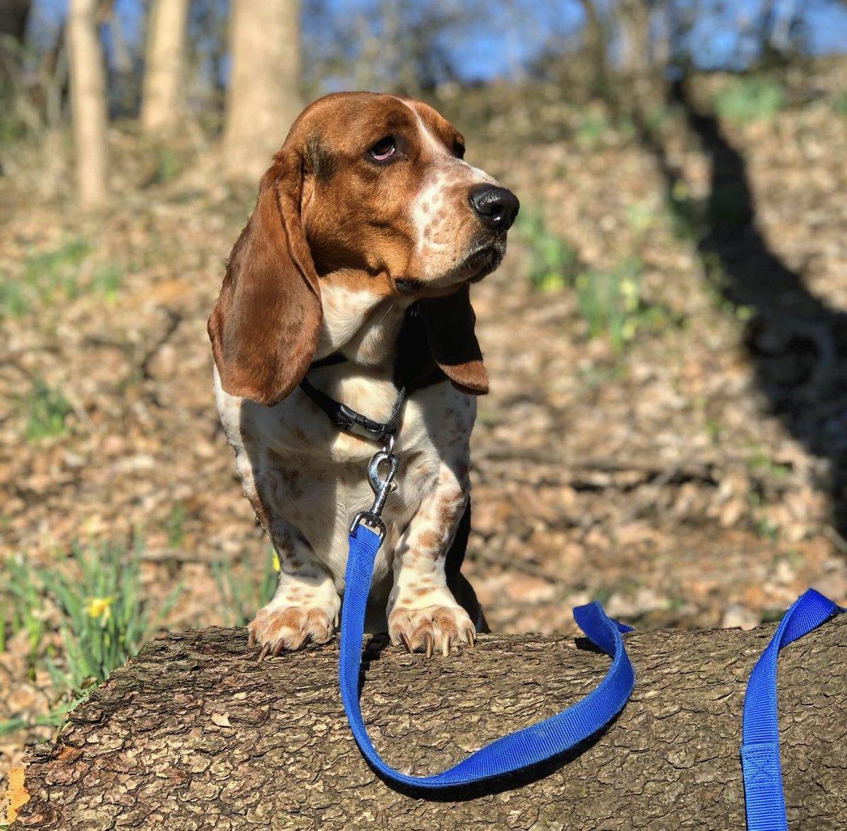 Today's a great day for an adventure! 🍂 #cincyparks #nature #getoutthere #autumn #weekend @CoastalPet #dog #dogs #woof #bark #ilovemydog #bassetworld #basset #bassets #bassethound #bassethounds #hounddog #puppy #cutie #puppylove #puppyeyes #cincinnati #dogsofcincy #ohio #explore