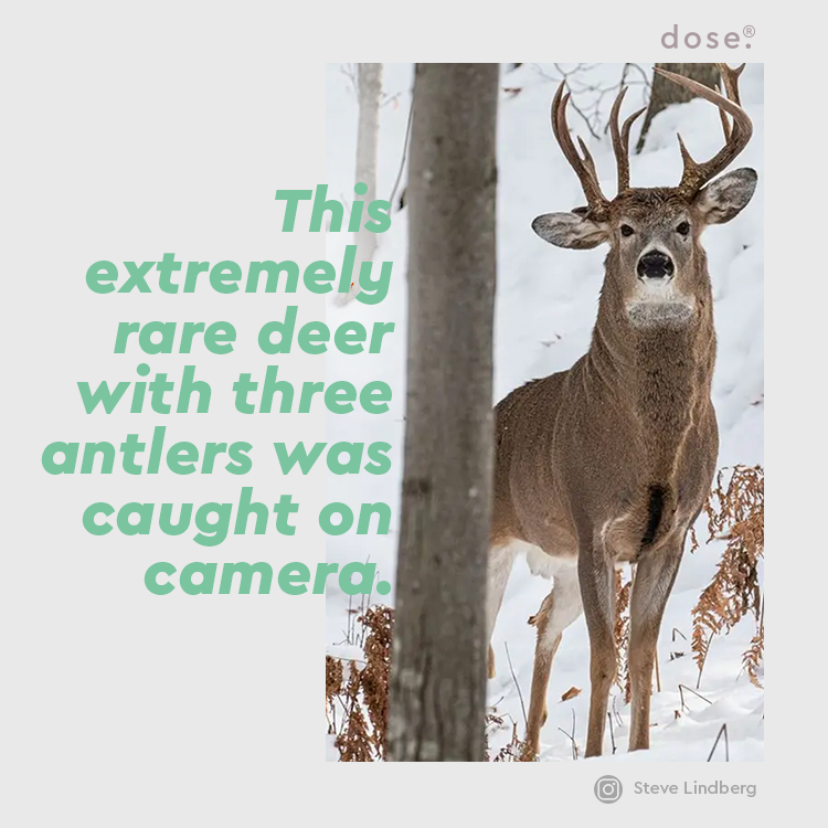 Former state representative Steve Lindberg captured the photo in the Upper Peninsula of Michigan. After having hunted his whole life, Lindberg decided six years ago to shoot deer with a camera instead.
