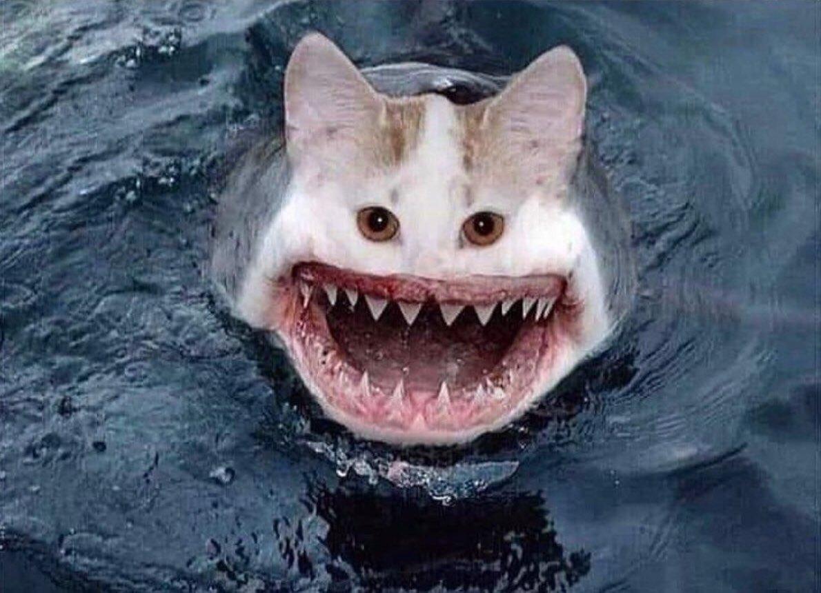 если картинка акула бесите урок душе преступайте